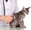 Ветеринарные клиники в Калаче